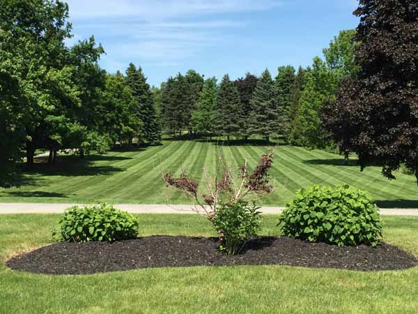 Lawn Care Services Brampton